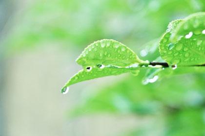 関東地方の梅雨の時期