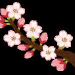 都立代々木公園(東京都渋谷区)の桜のお花見は場所取り競争が熾烈、注意点はこれ!